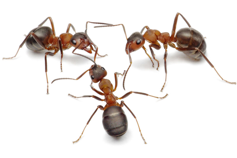 ants living in hot water heater
